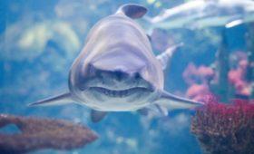 ВАвстралии акулы съели немецкого футболиста, который проводил тамсвой отпуск