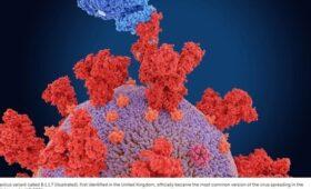Science News назвало британский штамм коронавируса наиболее заразным и смертоносным