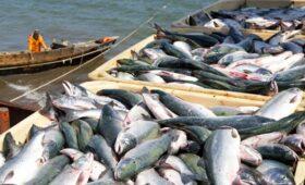 CNN (США): какая рыба самая полезная? Лучший выбор для вас и для планеты